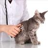 Ветеринарные клиники в Алексеевской
